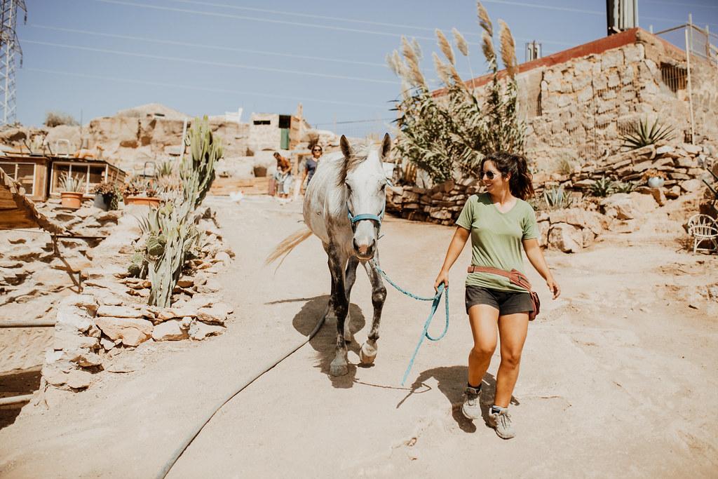 tenerife horse rescue