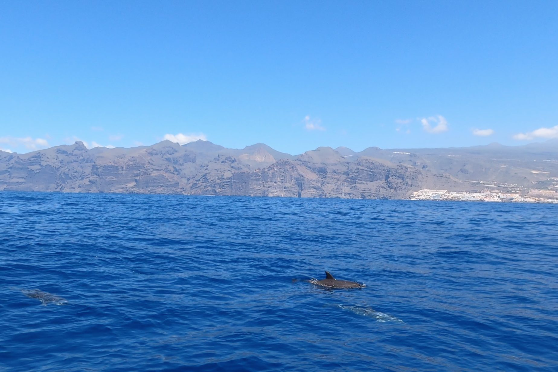 Los Gigantes Whale Watching